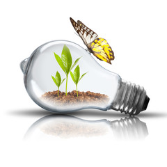 Light bulb with plant growing inside and butterfly