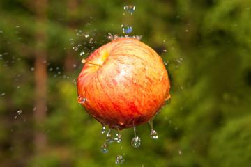 Fresh apple with water splashing