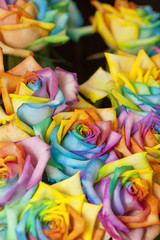 着色されたバラの花