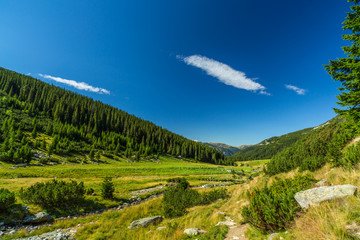 Pastoral mountain scenery and fir trees in the Alps, in summer