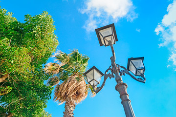 lamppost and palms