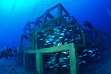 school of fish and artificial Cubed Reef in Chumporn, Thailand