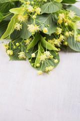 Fresh linden flowers