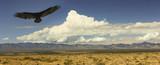 A Vulture and Lightning, Chiricahua Mountains, Arizona poster