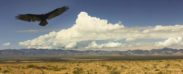 A Vulture and Lightning, Chiricahua Mountains, Arizona