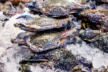 Fresh Horse Crab lay on ice in seafood supermarket.