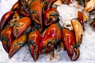 Fresh raw Crab Claws lay on ice in seafood supermarket.