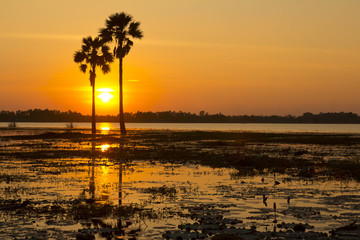 Silhouetted of Two palm  tree during sunset