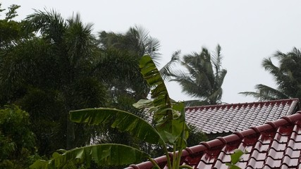 Bad Weather in Tropics. Wet Houses and Palm Trees.