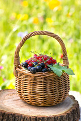 Basket of black currant and red currant
