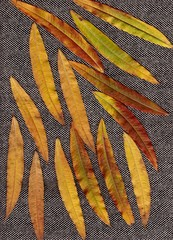 Background for the template. Texture. Autumn leaves.