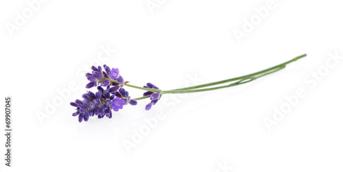 Leinwandbild Motiv Lavender flowers isolated on white