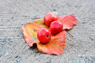 Herbst - Ernte