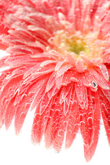 Beautiful flower in sparkling water, close-up