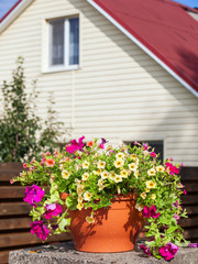 Flowerpot with petunia flowers near a home