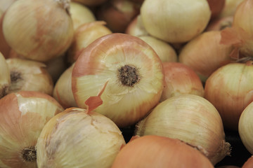 Onion in the market