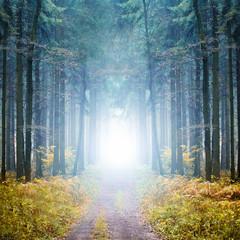 Mystischer Wald im Nebel
