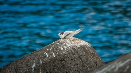 Seagull resting on a rock