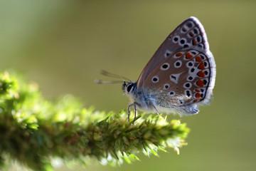 Papillon contre-jour