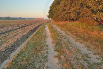 Рассвет в поле