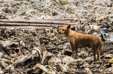 Dogs live in garbage
