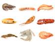 collage crustacés