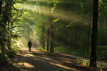 Man walking in a lane of trees and sun rays.