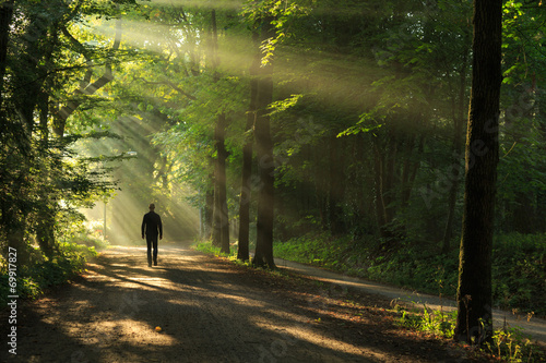 Leinwanddruck Bild Man walking in a lane of trees and sun rays.