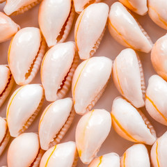 beautiful setting of seashell as a background, closeup