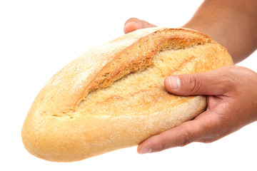 Bread in hands on white background.