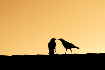 Bird Kissing
