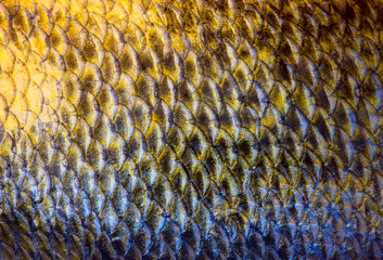 Art Real zander Fish Scales Background