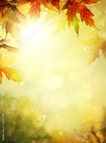Leinwanddruck Bild autumn leaves backgrounds; Colorful foliage in the autumn park