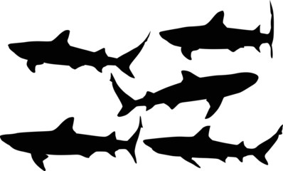 isolated five shark black silhouettes collection