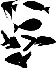 set of six fish silhouettes isolated on white
