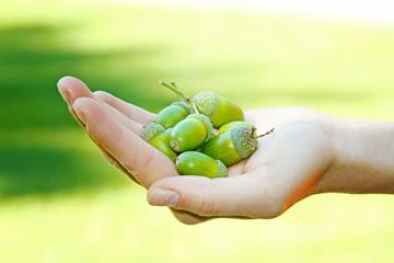 hand full of acorns on green grass background