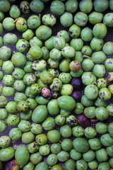 Walnüsse mit grüner Fruchthülle nach der Ernte im Herbst