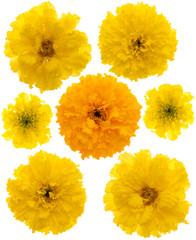 Set of marigolds