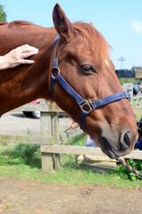 Horse shiatsu massage