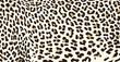 Tiger fur texture - 69933886