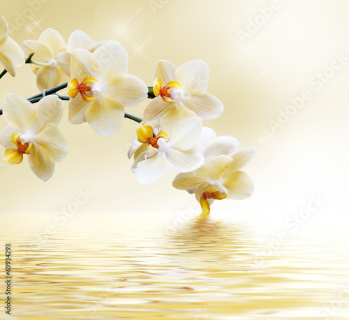 Beautiful white orchid - 69934293
