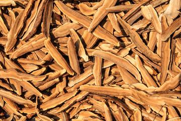 Dried Ganoderma lucidum mushroom