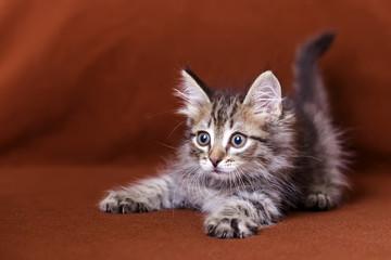 Cute striped kitten