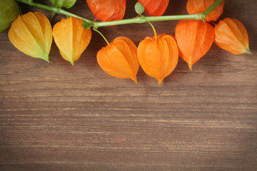 Automn Background Physalis