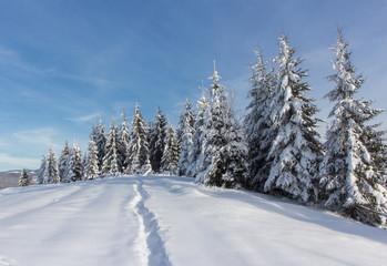 Winter in mountains Carpathians,
