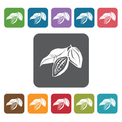 Cacao sign icon symbol set. Tropical fruits set. Rectangle colou