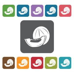 Melon sign icon symbol set. Tropical fruits set. Rectangle colou