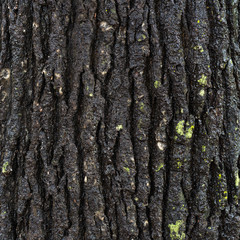 Black bark textured