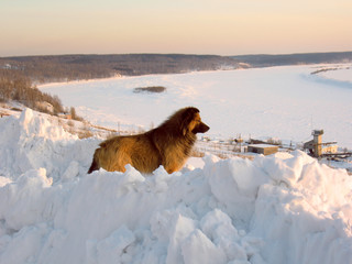 dog on bank of winter river