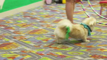 Jumping smart dog